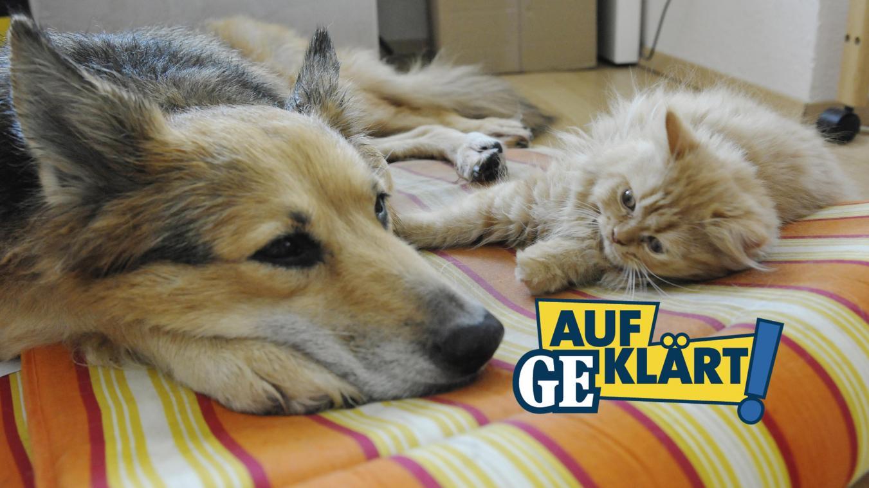 Aufgeklart Darf Ein Vermieter Haustiere Verbieten Grenzecho